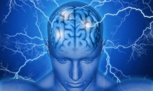 Фото №1 - В петербургском музее откроют тайны мозга