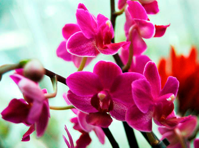 Фото №2 - 5 сортов самых красивых и неприхотливых орхидей