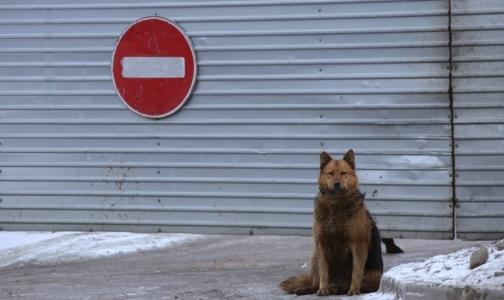 Фото №1 - Что делать, если вас укусила домашняя или бродячая собака