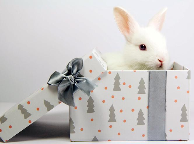 Фото №5 - 10 самых неудачных новогодних подарков
