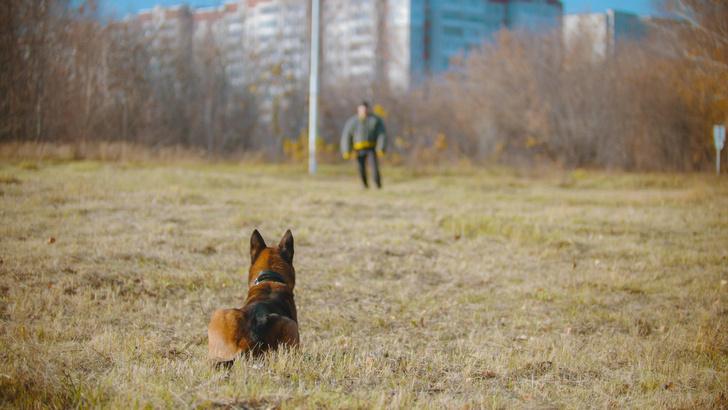 Фото №1 - В Белоруссии изобрели очки, которые упрощают дрессировку собак