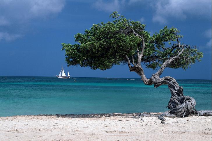 Фото №1 - Тот самый остров: репортаж с самого беспечного из Карибских островов