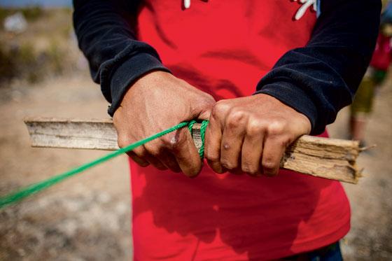 Фото №6 - Пестрые ленты