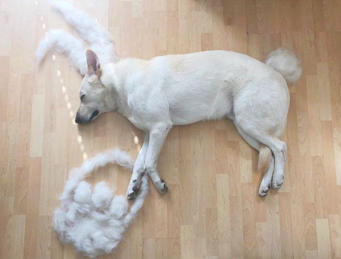 Фото №5 - Девушка создает забавные образы для своей собаки из ее собственной шерсти (много фото)
