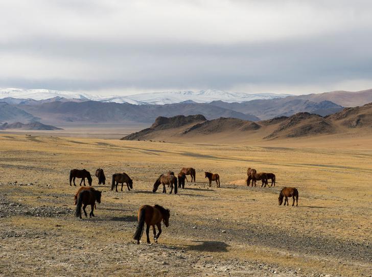 Фото №4 - Как восполнить энергию и красоту в горах Алтая