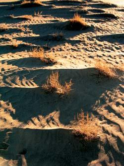 Фото №2 - Песчаные замки Эола