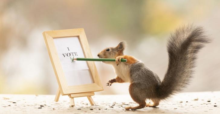 Фото №1 - Выборы!