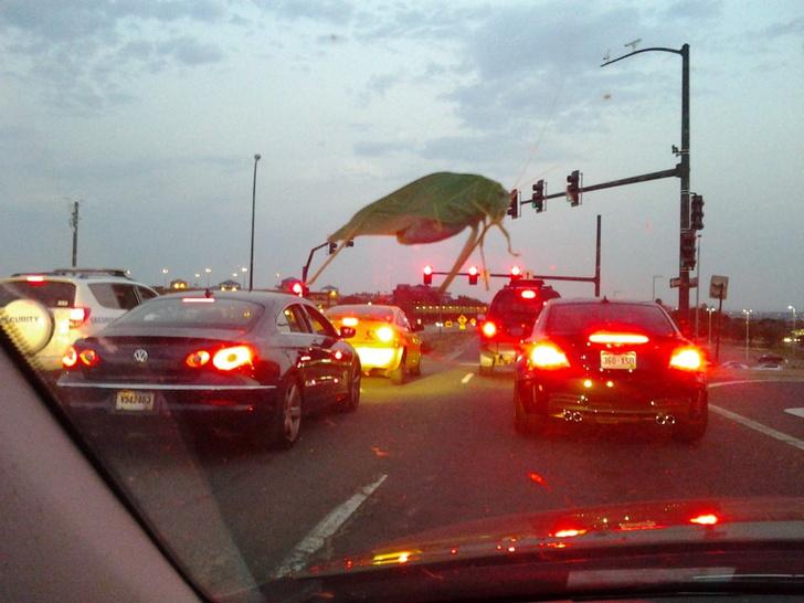 Фото №2 - Из-за оптического искажения кузнечик на лобовом стекле машины кажется инопланетным монстром
