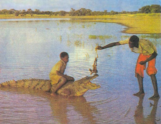 Фото №1 - Крокодилы не дадут соврать