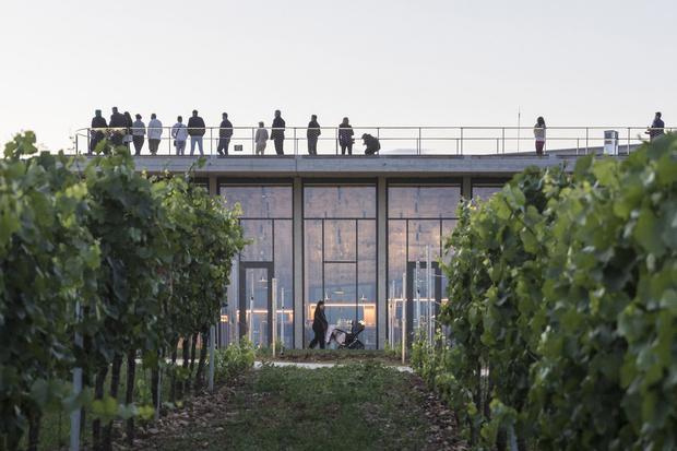 Фото №4 - Винодельня со смотровой площадкой на крыше в Чехии