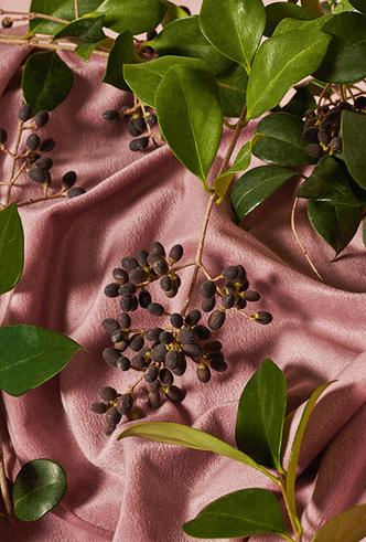 Фото №2 - Ароматы лета в одном флаконе: Gucci Bloom Acqua di Fiori
