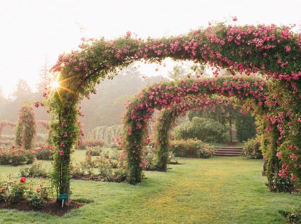 Фото №1 - 5 лучших растений для вертикального озеленения садового участка