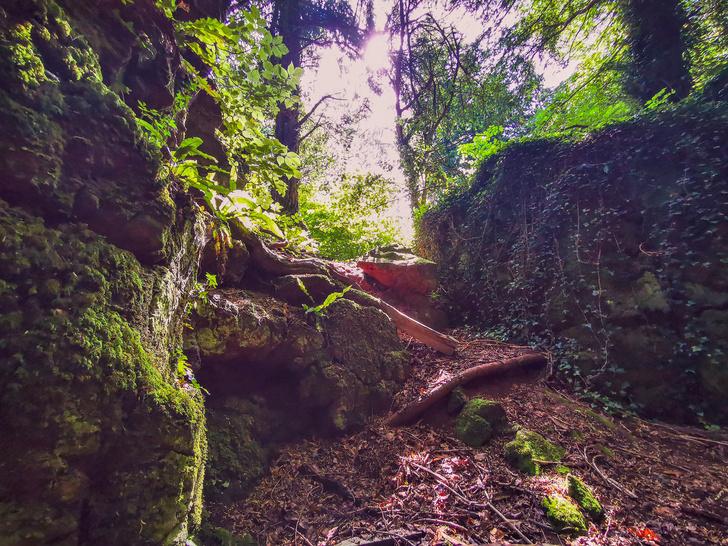 Фото №1 - Секретные миры: 7 таинственных британских садов