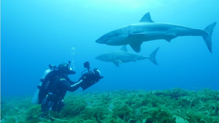 Фото №3 - Умные до ужаса: акулы — профессора убийства
