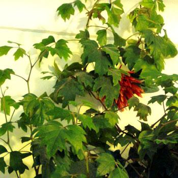 Фото №10 - Комнатные растения для ленивых