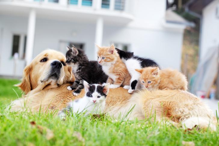 Фото №2 - Точная формула: как перевести возраст собаки в человеческий