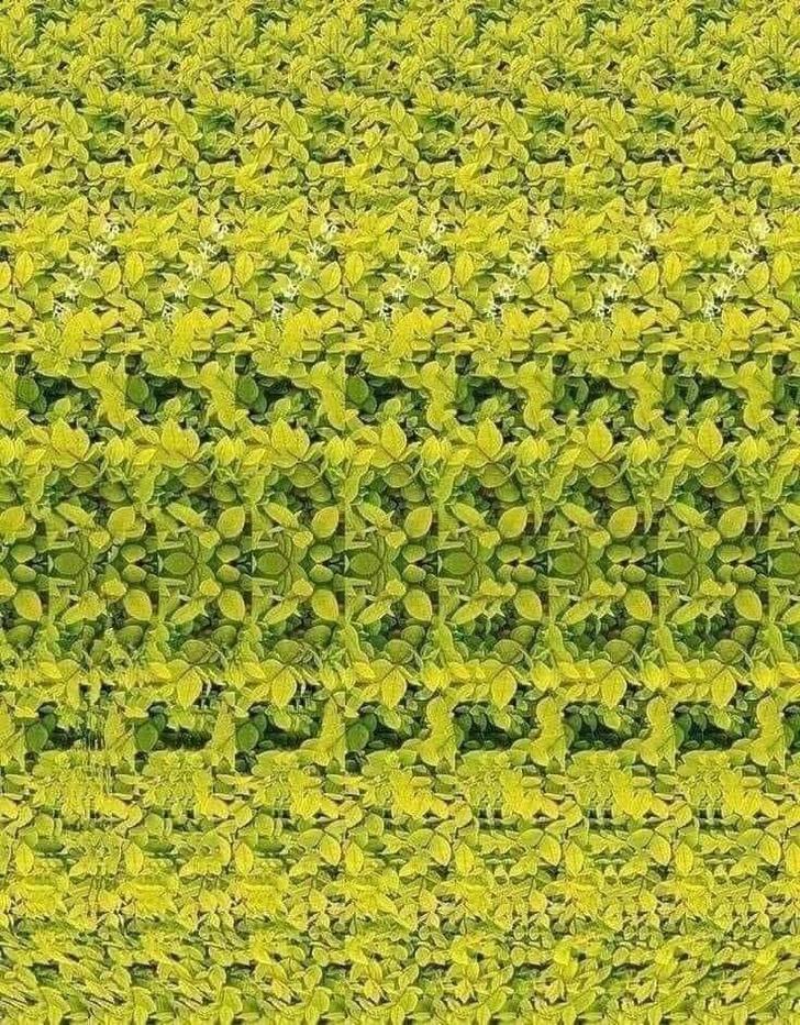 Фото №3 - Стереограмма, на которой 3D-картинку увидят даже те, кто никогда ее не видел