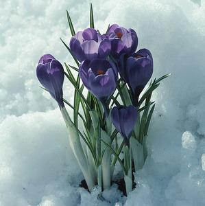 Фото №1 - Февраль стал самым солнечным