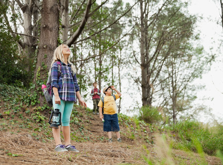 Дети в лесу