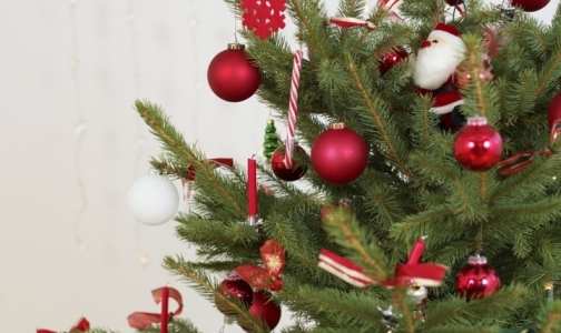 Фото №1 - От какой елки меньше страдают аллергики