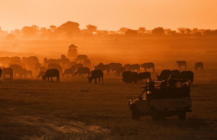 Фото №1 - Язык слонов и львов: словарь рейнджера ЮАР