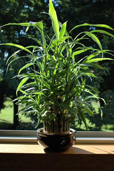 Фото №10 - Зарядись! 10 растений, которые улучшают самочувствие