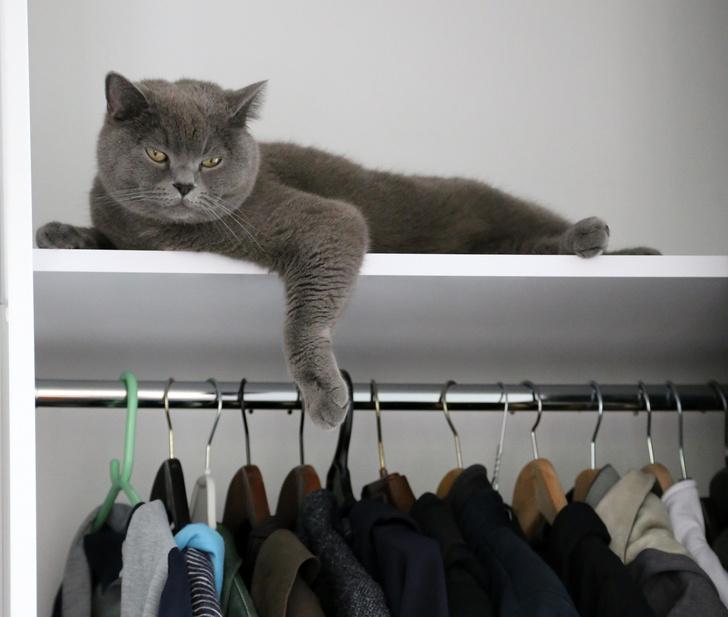 Фото №6 - 10 поз, в которых спит твой кот, и что они значат