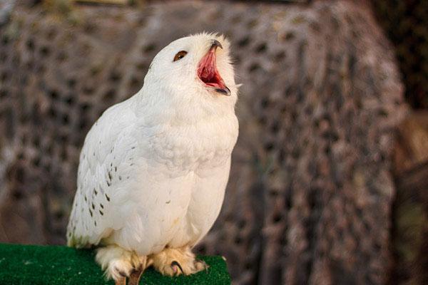 Фото №1 - Могут ли птицы и рыбы зевать?