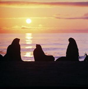Фото №1 - Командорские острова свяжут с Камчаткой паромом