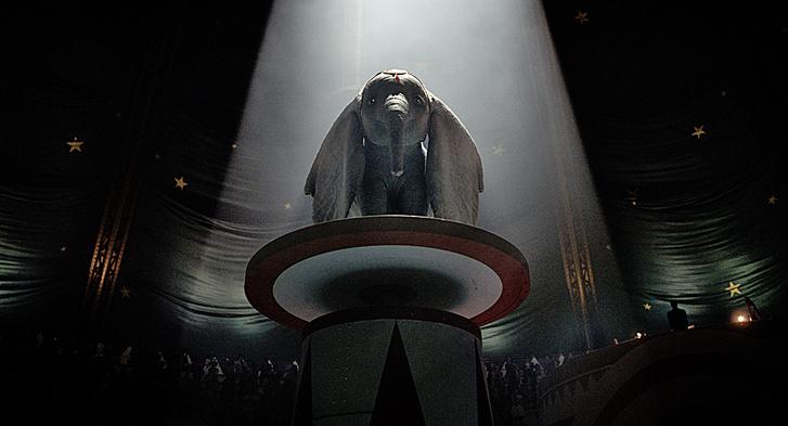Фото №8 - Зоология: почему слоны не летают
