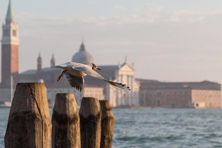 Фото №1 - Место дня. Венеция (Италия)