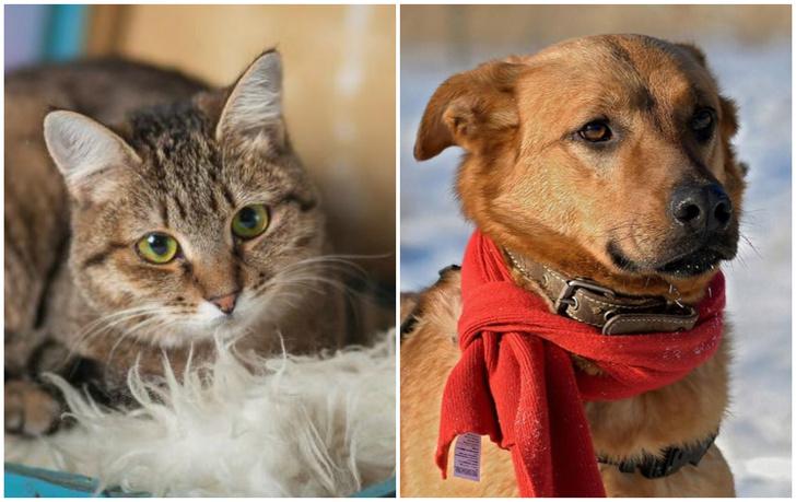 Фото №1 - Котопёс на карантине: кошка Дарёна и пес Киоки ждут своих людей