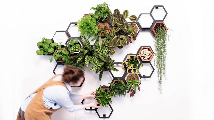 Фото №1 - Модульная зеленая стена от Horticus