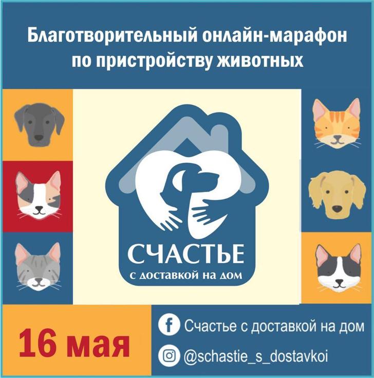 Фото №1 - 16 мая состоится 12-часовой онлайн-марафон «Счастье с доставкой на дом» по пристройству собак и кошек из приютов