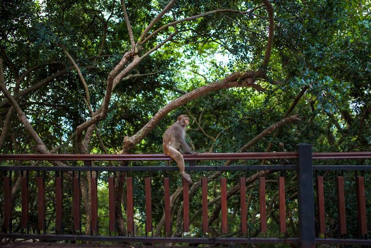 Фото №2 - В гармонии с природой: богатства тропического острова Хайнань