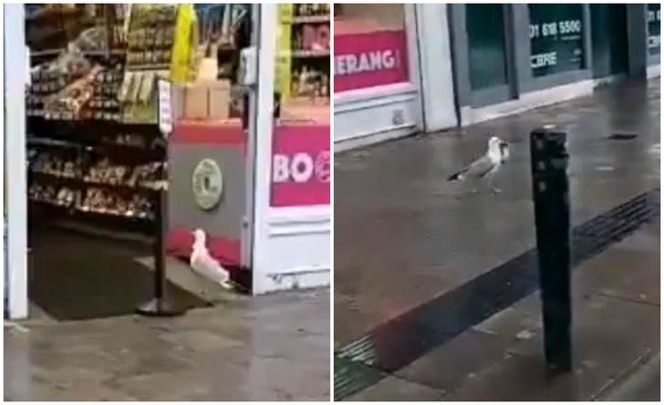 Фото №1 - Чайка с криминальными наклонностями виртуозно ворует из магазина пакетик сухариков (видео)