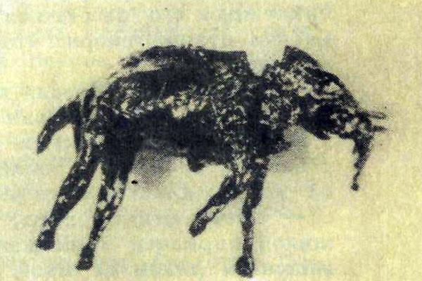 Фото №1 - Таинственный зверь йесин
