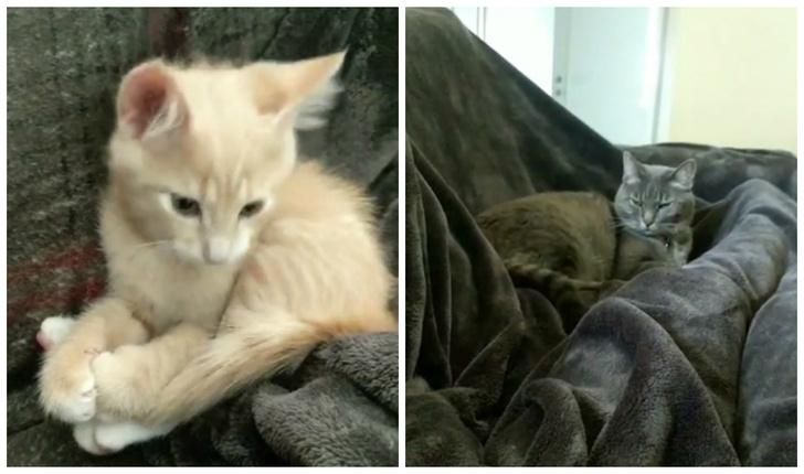 Фото №1 - Реакция кота на котенка, которого хозяин только что принес домой (видео)