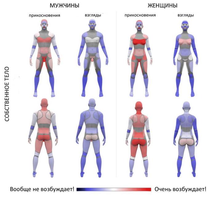 Фото №2 - Новейшая карта мужских и женских эрогенных зон
