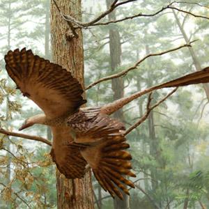 Фото №1 - Определился хозяин гнезда динозавров