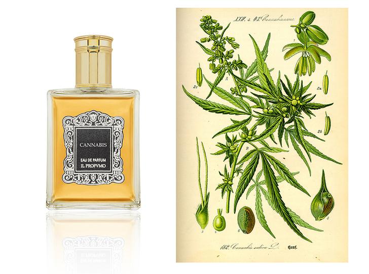 Фото №10 - Opium, Cocaine, Narcotico: ароматы, названия которых лучше не произносить вслух