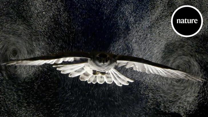 Фото №1 - Как выглядят воздушные вихри, которые птицы создают при полете (видео)