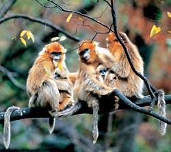 Фото №3 - Горы золотой обезьяны