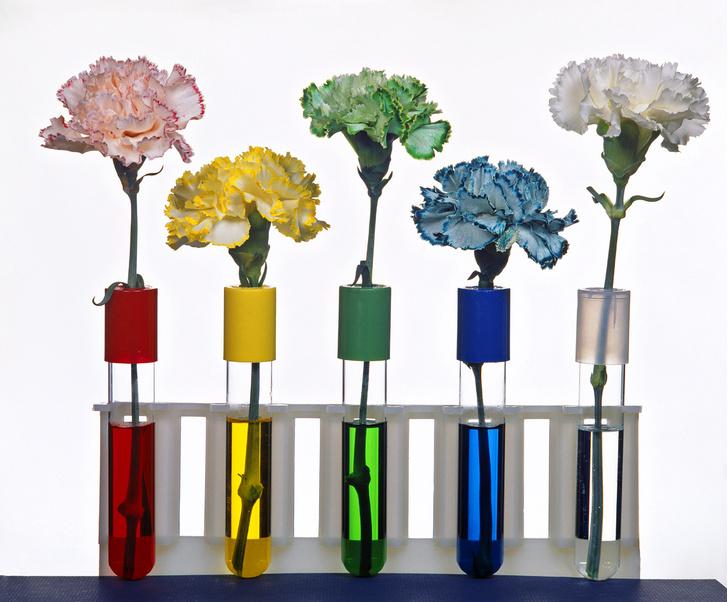 Фото №1 - Опыт: цвета цветов