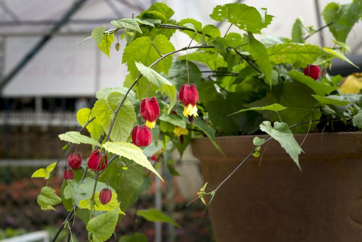 Фото №2 - Комнатные растения, которые помогут пережить сезон простуд