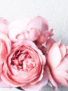 Фото №4 - Тест: Выбери цветок, и мы угадаем, какого цвета у тебя глаза