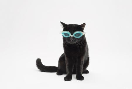 Фото №1 - Гадаем на черных кошках: какая плохая примета ждет тебя в пятницу 13-го?