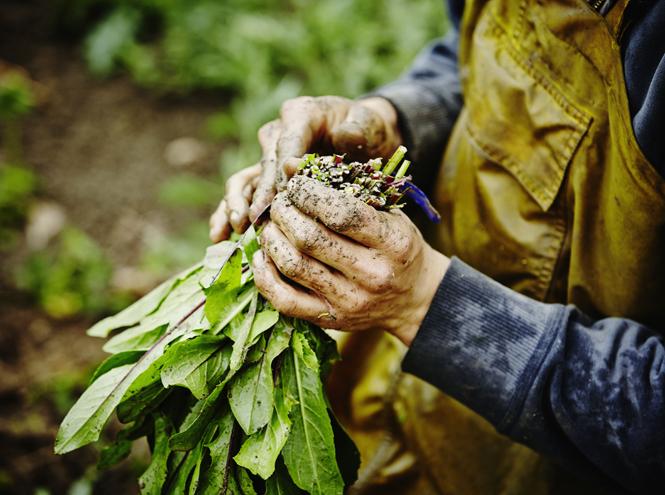 Фото №2 - На лоне природы: агротуризм в России как новый вид отдыха