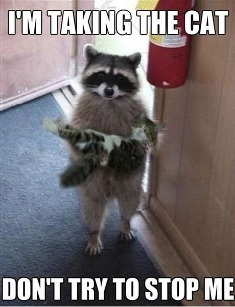 Фото №14 - Милота и угар: 20 дико ржачных мемов про животных