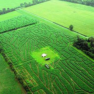 Фото №1 - Статуя Свободы на кукурузном поле